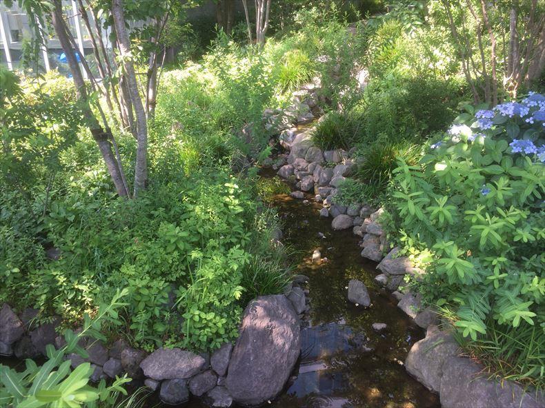豊島の森2